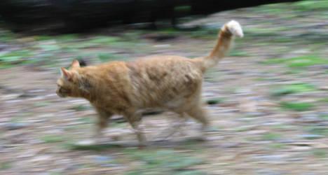 High-speed cat