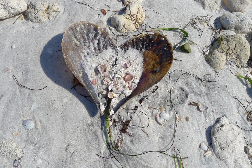 Valentine from Poseidon