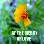 aT tHE mERCY