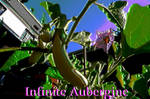 Infinite Aubergine