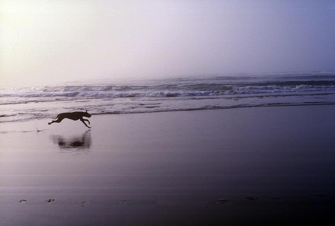 OCEAN JOY by JobobArikan