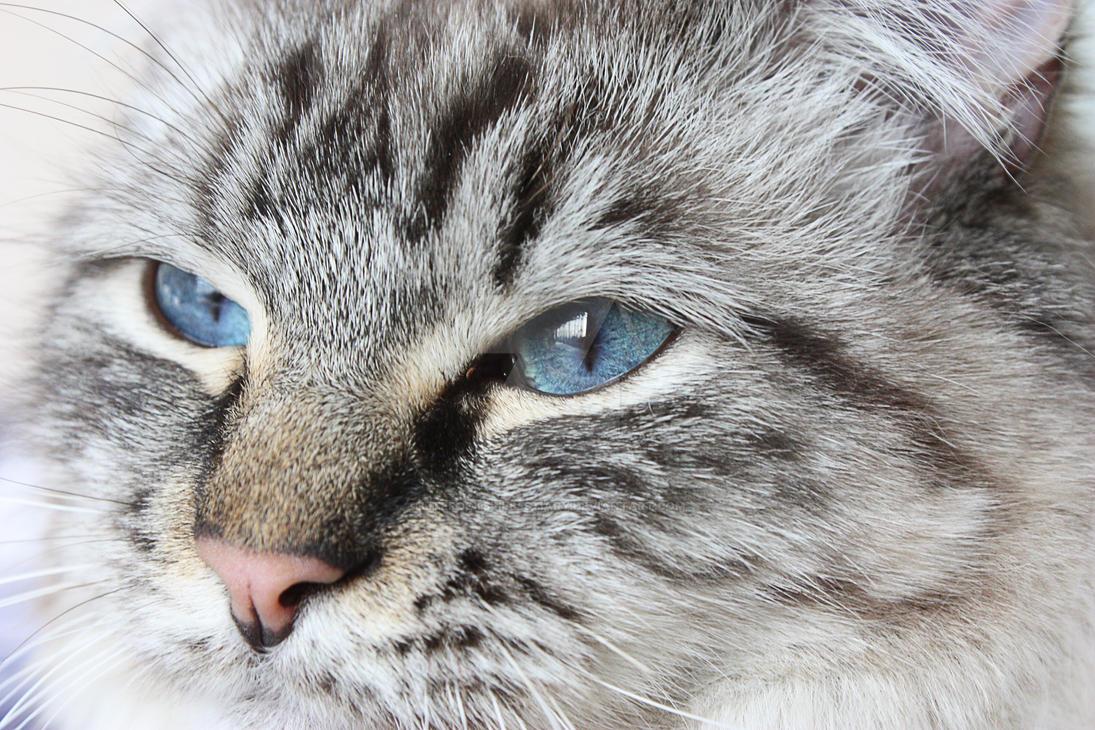 Blue Eyes by LitefootsLilBestiary