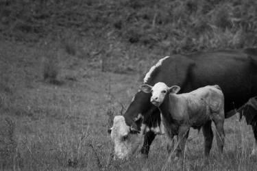 Animals #35 by yellowmarsh