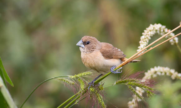Birding #1