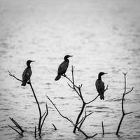 Birding #2