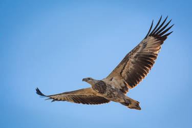 Birding #3