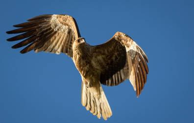 Birding #4