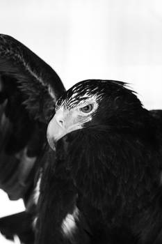 Birding #5
