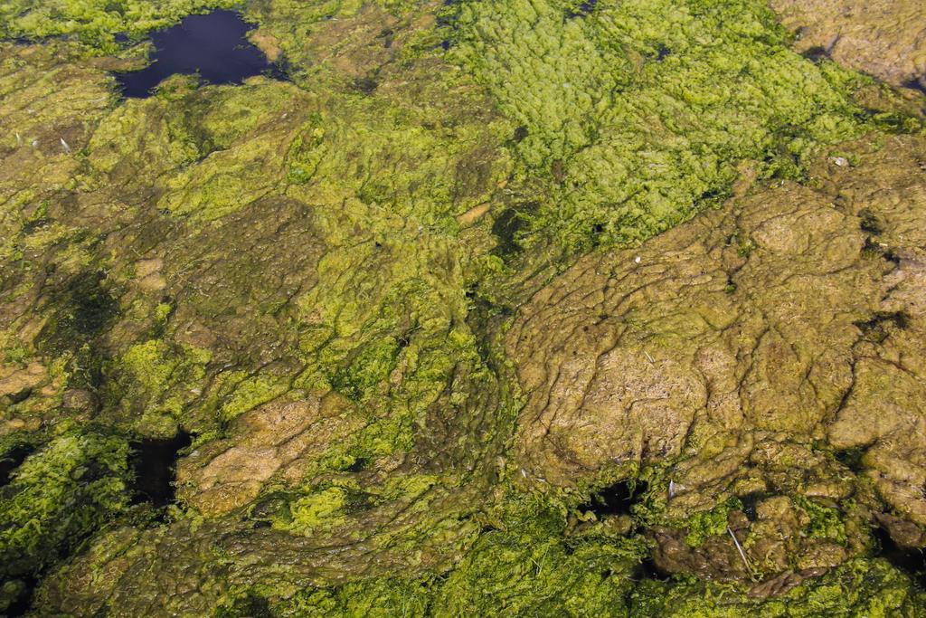 Pond Scum Texture Stock Image Brown Green Gross Sl by TextureX-com