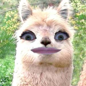 Caterpilli's Profile Picture