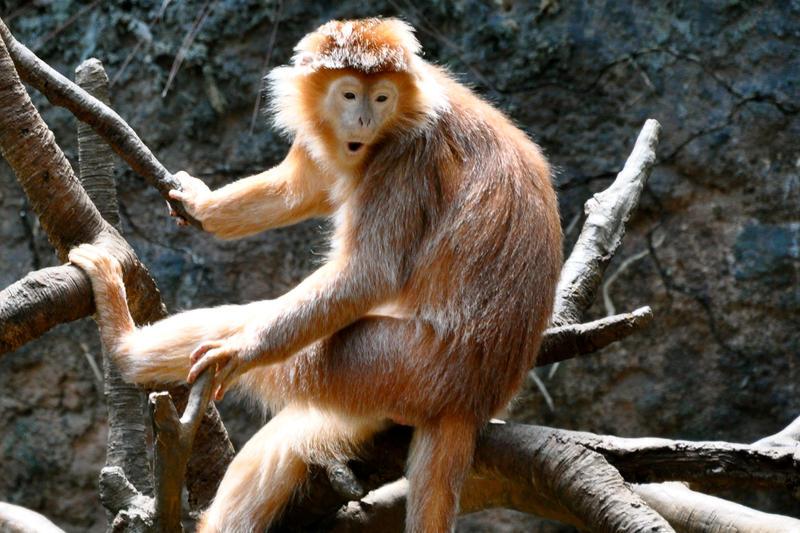 Consider, Rented sex monkey