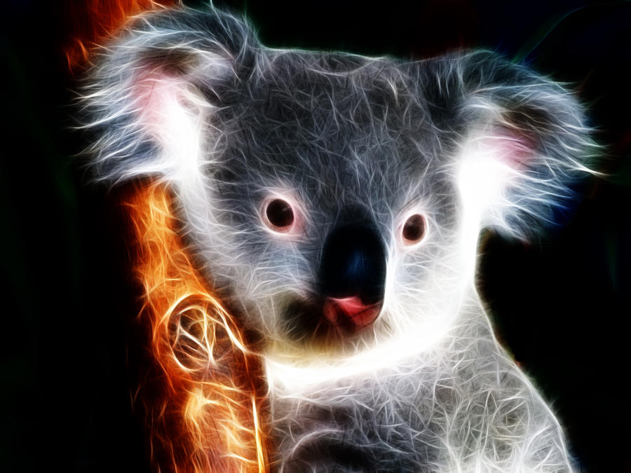 Koala by Lolly1123