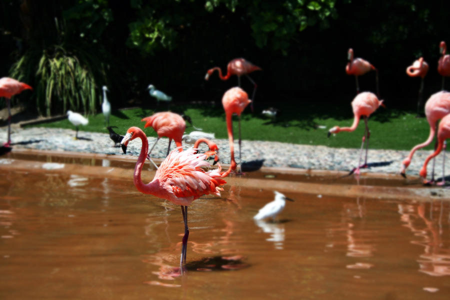 Flamingo by natatomic