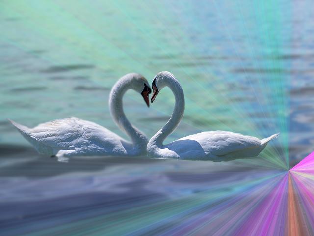 Image Gallery swan heart