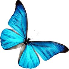 [Obrázek: butterfly_png__by_foreverlovatoo-d6ijeov.png]