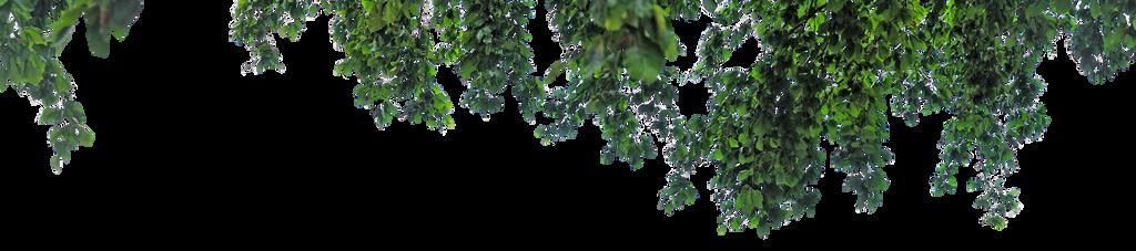 Leaf PNG.
