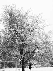First Snow in Black and White