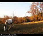 autumn feeling.II