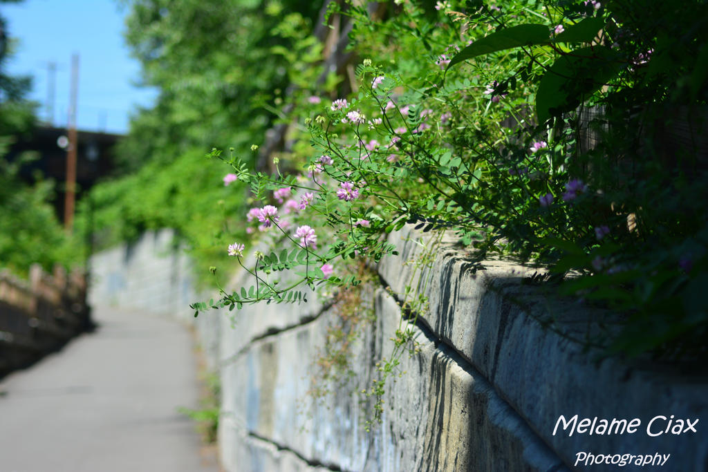 Wall Flower 2017-06-11 (39) B by MelameCiax