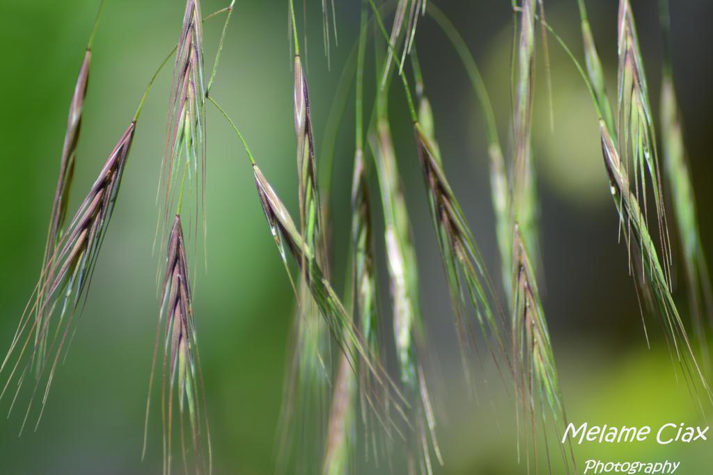 Grains 2017-06-11 (43) B by MelameCiax