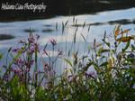Wild Flowers (12)