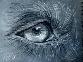 Eyes of the beast by MLSNight