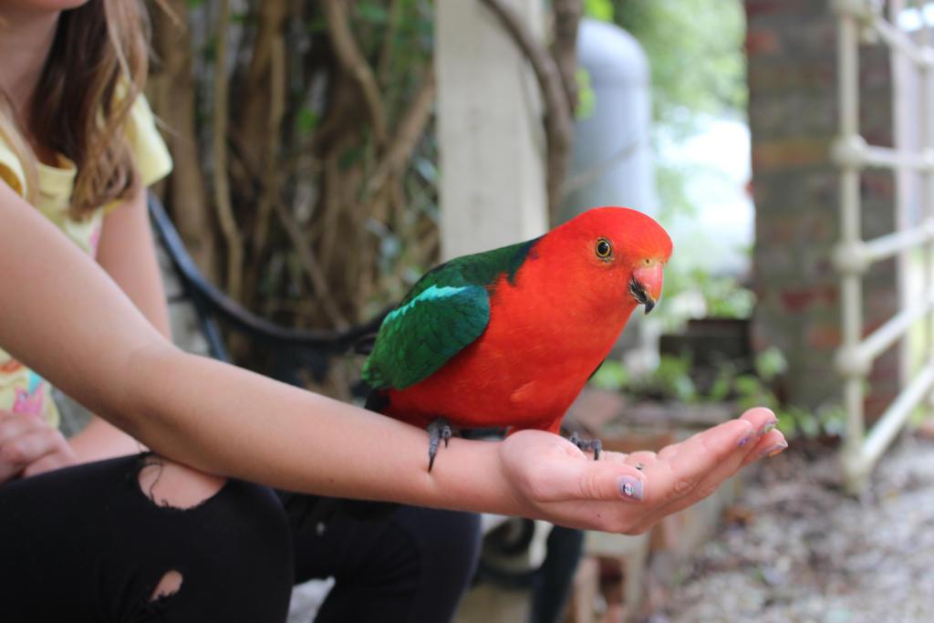 Bird by mangomagic101