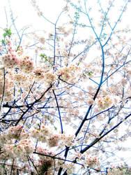 Cherry Skies by happycamper19
