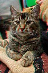 3d Anaglyph cat by DistrictAliens