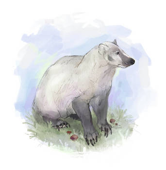 badger by wakesfield