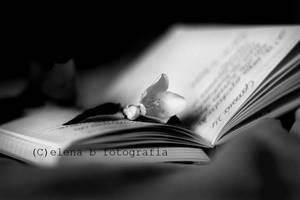 e poso un fiore su ogni mio.. by Pensieri
