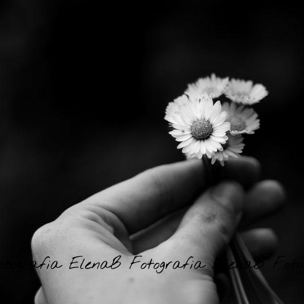 Quel mazzolin di fiori by Pensieri
