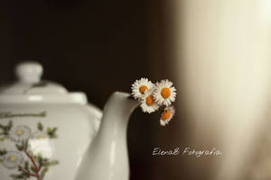 Daisy Tea by Pensieri