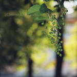 Urban green grapes by Pensieri