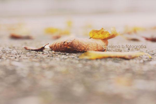 Autumn fall by Pensieri