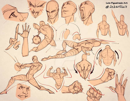 Head, bodies and shapes explanations