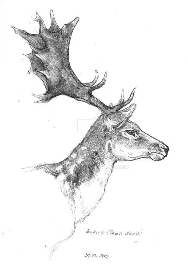 Fallow Deer by Narsilia