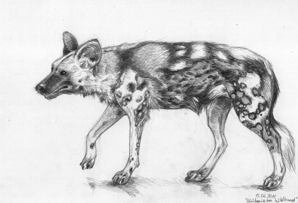 This is a graphic of Playful African Wild Dog Drawing