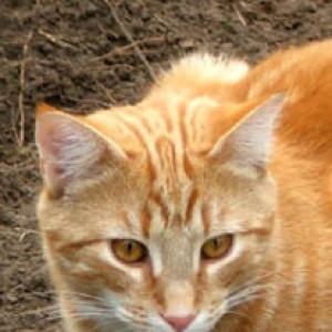 Haolo's Profile Picture