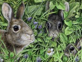 Happy Year of the Rabbit by larkin-art