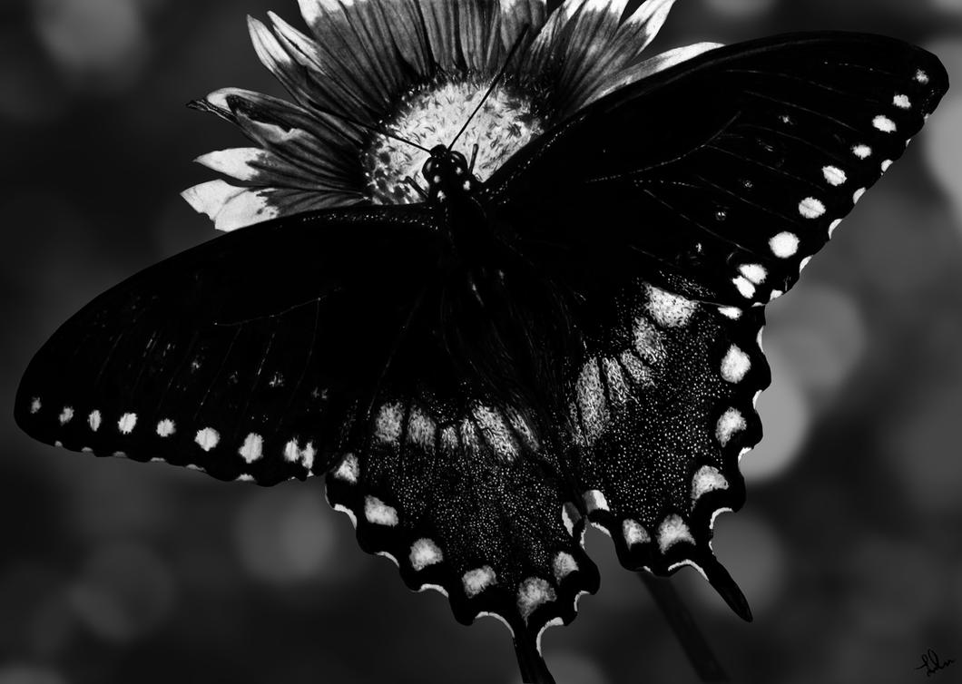 On Dark Wings by Shekhina