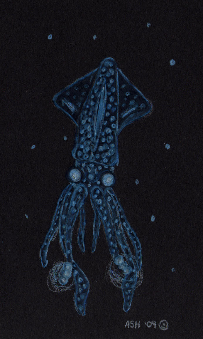 Firefly Squid Anatomy