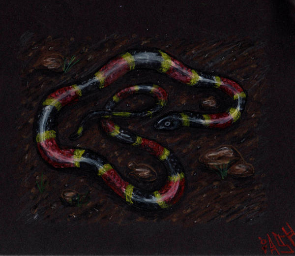 Coral Snake By SpacerHunterZORG On DeviantART