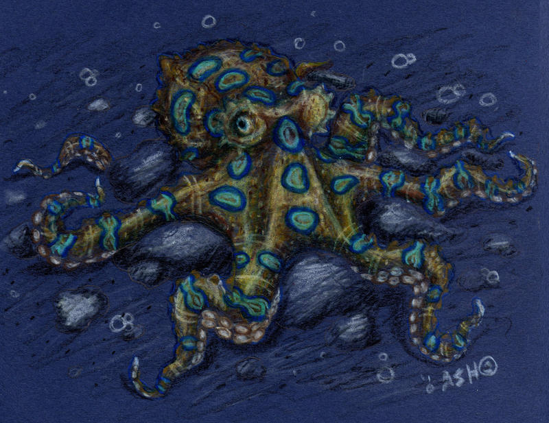 Blue-Ringed Octopus by SpacerHunterZORG on DeviantArt