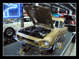 MUSTANG gold by sandwedge