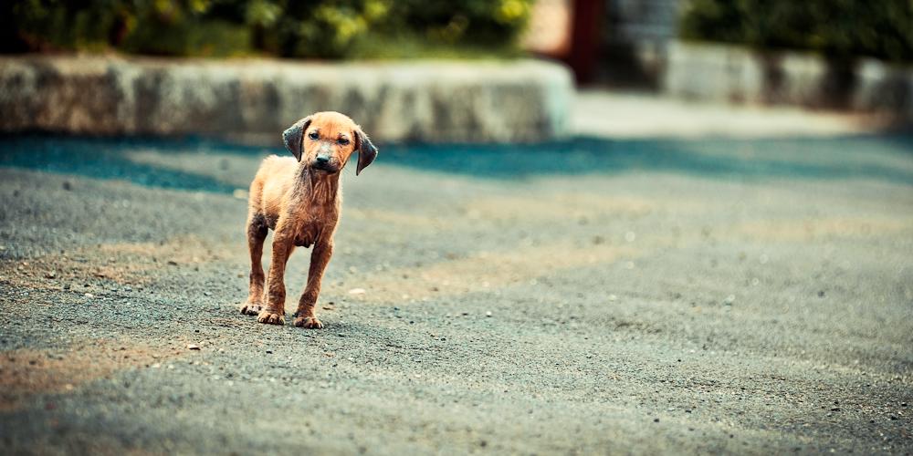 amis des bêtes, cliquez pour les animaux ! clicanimaux…  - Page 4 Stray_puppy_by_neokwondo-d49d7gy