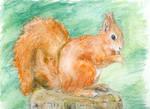 ..Squirrel..