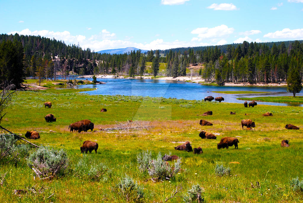 Yellowstone National Park 2 by creativelycharged