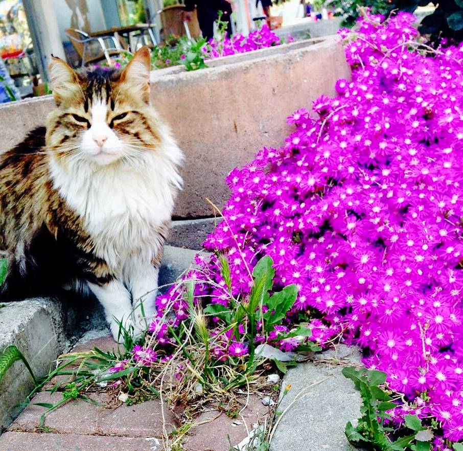The Beauty with Flowers