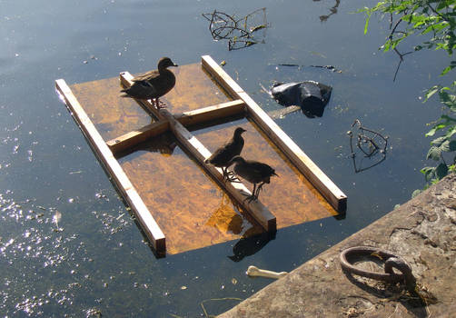A raft for the birds